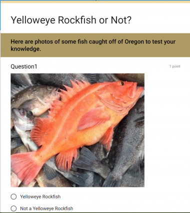 Rockfish identification tips | Oregon Department of Fish & Wildlife