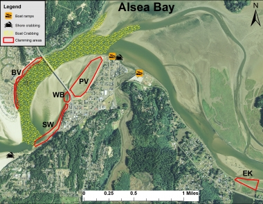 Alsea bay sport clamming and crabbing areas