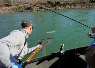 image of two anglers in a boat, one is landing a steelhead with a net