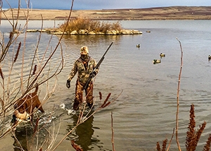 image of a wading duck hunter with their dog