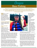 a photo of the front of the bass fishing flyer