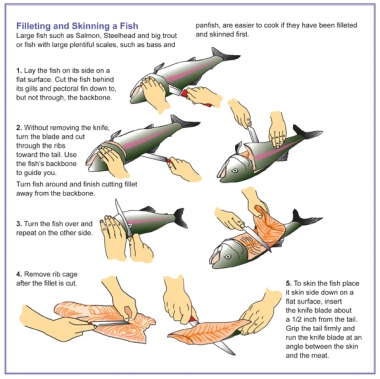step by step instructions on how to filet a fish