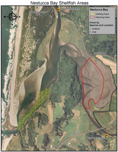 An aerial photo of the mouth of Nestucca Bay with colored overlay denoting areas for crabbing and clamming.