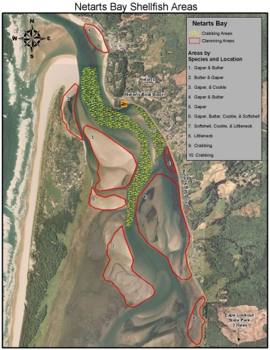 An aerial photo of the mouth of Netarts Bay with colored overlay denoting areas for crabbing and clamming.