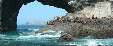 A group of stellar sea lions sit on a rocky outcropping at Orford reef