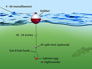 how to fish for trout oregon department of fish \u0026 wildlifea diagram of a bobber rig for fishing