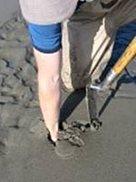 a man reaches into the sand to grab a clam