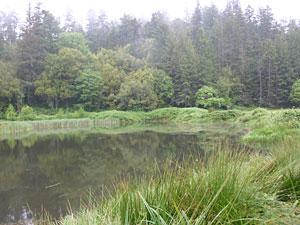 Arizona pond is surrounded by tall trees