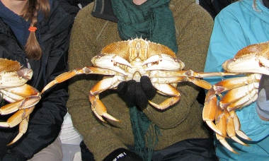 three people stand shoulder to shoulder and each holds a large dungeness crab