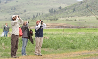 image of three bird watchers looking in a tree through binoculars