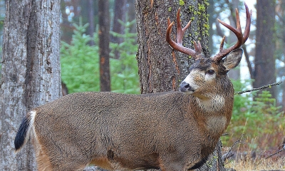 Big game hunting harvest statistics | Oregon Department of