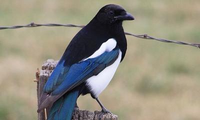 Birds | Oregon Department of Fish & Wildlife