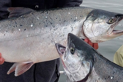 Two people standing on a boat each hold a large silver coho salmon