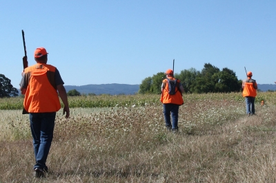 four people wearing hunter orange and carrying guns over their shoulders walk through a grassy field looking for pheasants