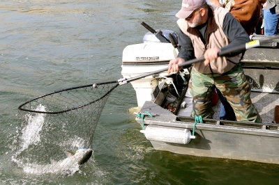 image of a boat angler netting a Chinook salmon