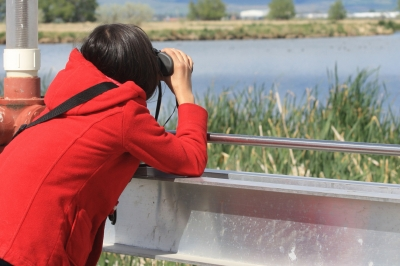 image of a young woman with binoculars looking for birds